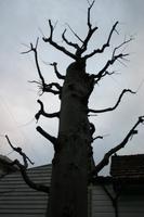 不気味な木