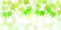 新緑 もみじ 和紙 背景