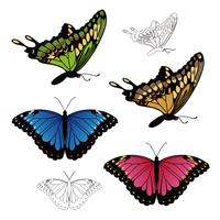 カラフルなアゲハ蝶やモルフォ蝶のイラスト
