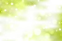 新緑 光 緑 背景