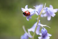お花とてんとう虫