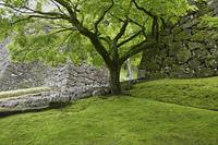 人吉城跡と新緑