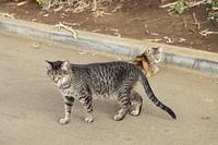 ハワイの猫