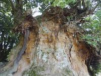 山の断面のむき出しの木の根