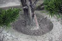 植木の盛り土