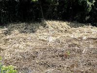 除草目的で枯らした雑草