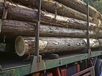 杉の原木を運ぶトラック