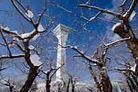 雪桜と五稜郭タワー