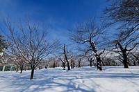 真冬の五稜郭公園