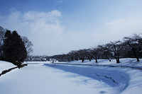 冬桜と五稜郭