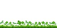 クローバー 葉 植物 背景