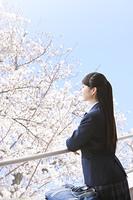 桜を眺める女子高生
