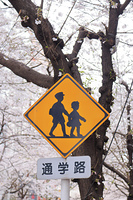 日本橋さくら通り 通学路標識