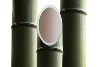 竹の割れ目