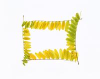 色づいた葉のフレーム