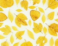色づいた葉のアレンジメント