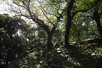 洲本城の樹木
