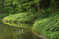 小石川後楽園・池