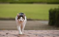 さぎ山記念公園・野良猫