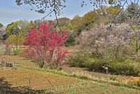 南部領辻・春の色彩