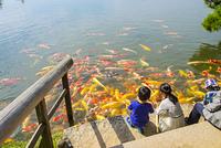 鯉と遊ぶ子供