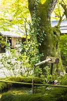 湯布院の緑