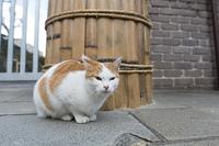 丸く座る猫