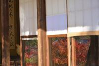 緑水庵の紅葉