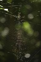 木洩れ日と蜘蛛の糸