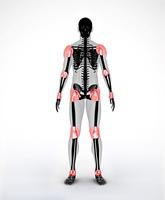 Joints of a black digital skeleton