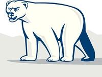 Polar Bear Isolated Cartoon
