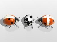 Marienkafer spielen Fusball