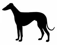 Die schwarze Silhouette eines Windhundes