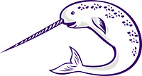 Narwhal Monodon monoceros unicorn whale