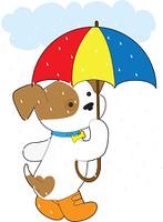 Cute Puppy in Rain