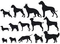 Hunde und Hunderassen
