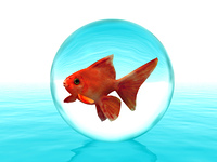 goldfish in a drop
