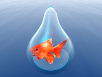 gold fish in a drop
