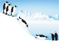 Pinguine beim rutschen