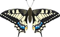 Schwalbenschwanz Schmetterling Illustration