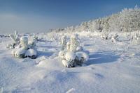 Wald im Winter - forest in winter 24