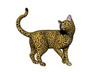 Hauskatzen freigestellt