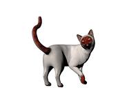 Katze in Pose