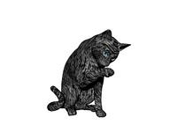 Katze in Pose freigestellt