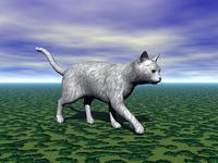 Wildkatze im Grunen