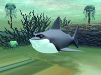 Haifisch im Meer