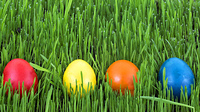 Easter eggs in a grass