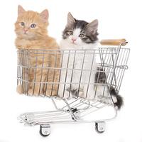 Zwo kitten in shopping cart