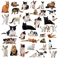 cats in studio