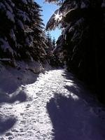 Pfad in den Winter